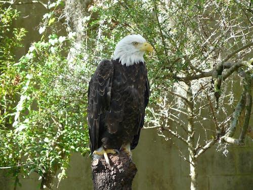 Fotobanka sbezplatnými fotkami na tému dravé vtáky, orol, zvieratá
