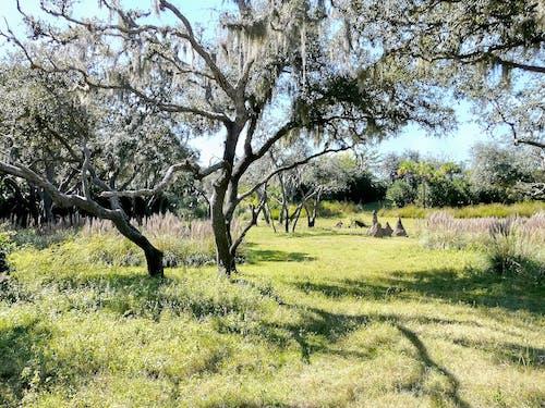 Бесплатное стоковое фото с дерево, деревья, дневной свет, живописный