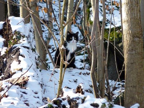 Fotobanka sbezplatnými fotkami na tému mačka, príroda, sneh, zvieratá