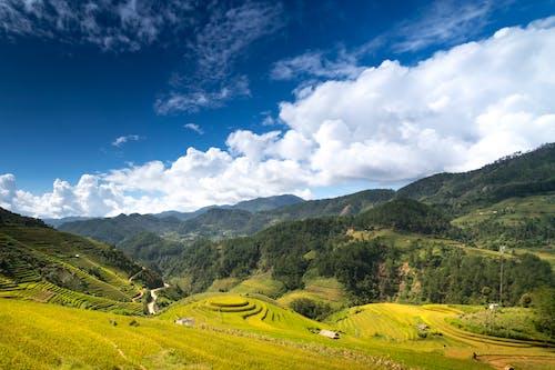 Foto d'estoc gratuïta de a l'aire lliure, agricultura, camps de cultiu, granja