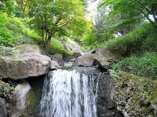 Fotobanka sbezplatnými fotkami na tému príroda, stromy, vodopád