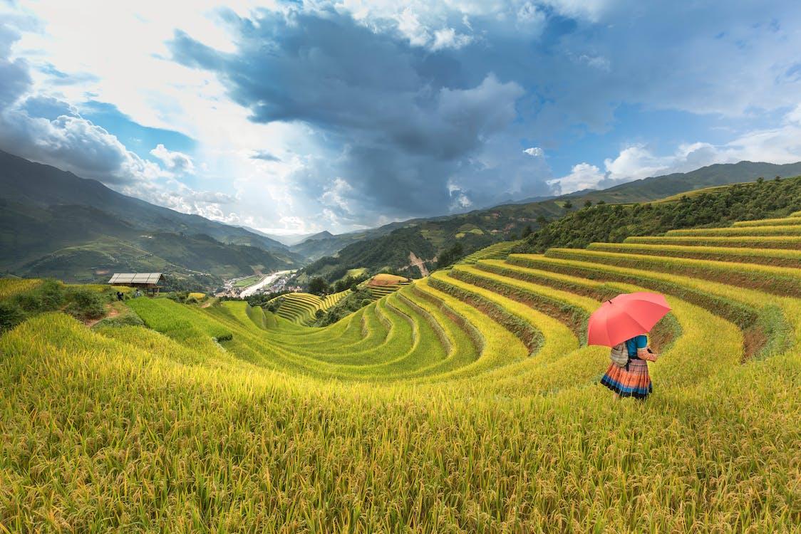 farm, festői, fű
