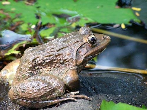 Fotobanka sbezplatnými fotkami na tému príroda, žaba, zvieratá