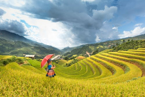 Photo of Person on Rice Terraces