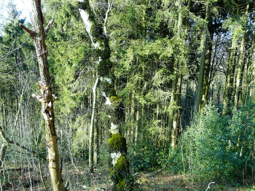 Fotobanka sbezplatnými fotkami na tému mach, príroda, stromy