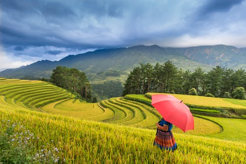 Photo of a Person Standing on Rice Terraces
