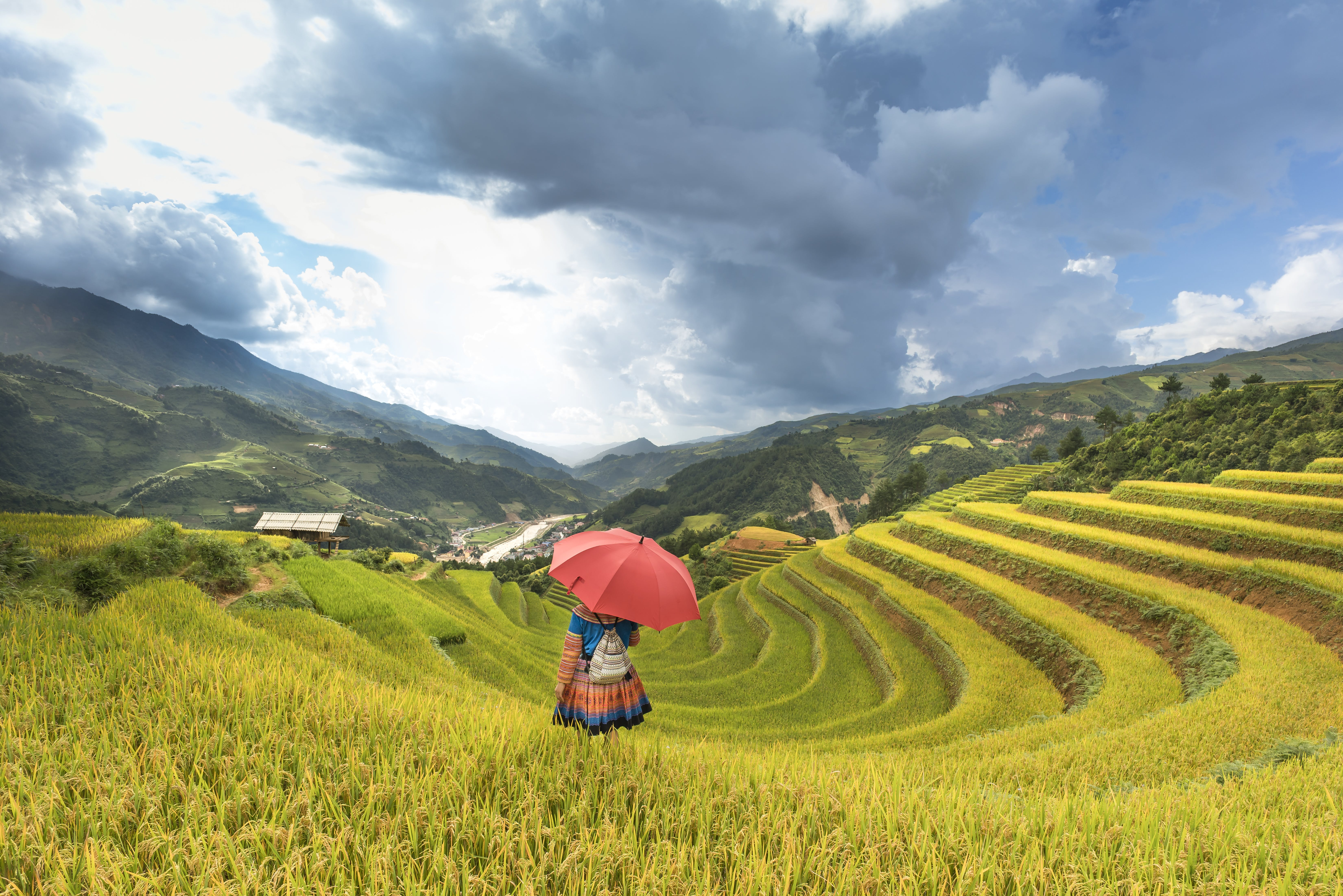 Person Under Red Umbrella Standing On Rice Terraces