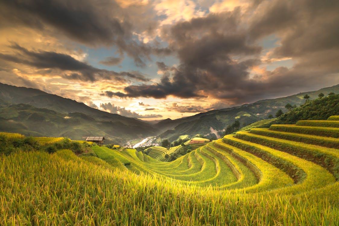 agricultura, alba, camp