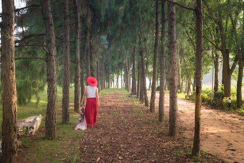 Darmowe zdjęcie z galerii z chodzić, drzewa, kobieta, na dworze