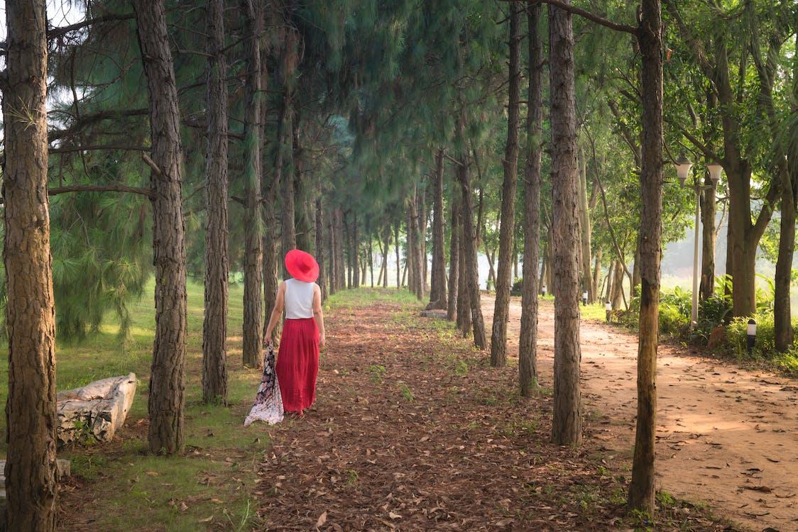 chodzić, drzewa, kobieta