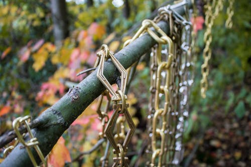 分公司, 森林, 樹木, 鏈 的 免费素材照片