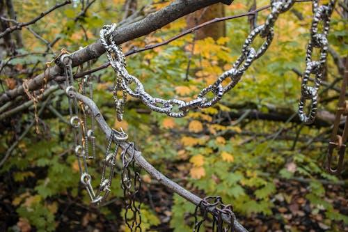 森林, 樹木, 鏈, 魔法森林 的 免费素材照片