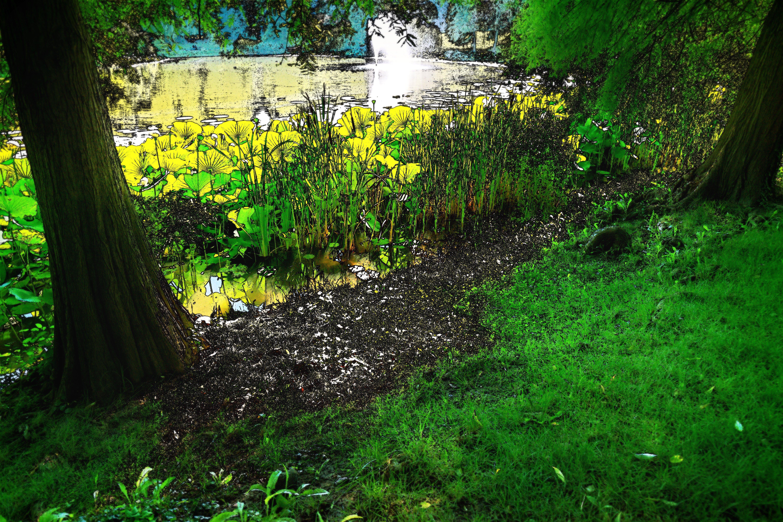 Foto d'estoc gratuïta de aigua, arbres, efecte de vora, estiu