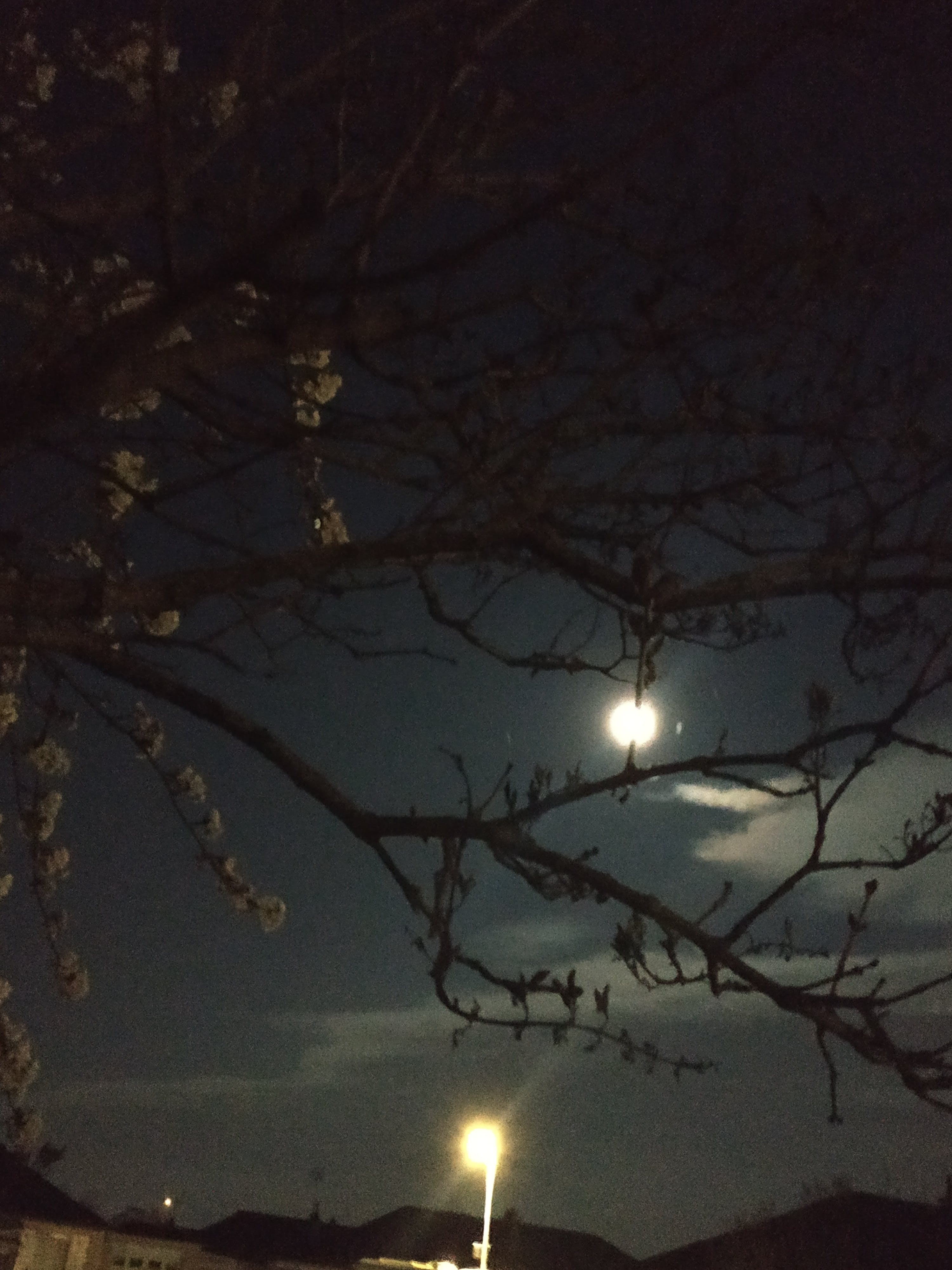 Free stock photo of cherry blossom, lamppost, moon, night