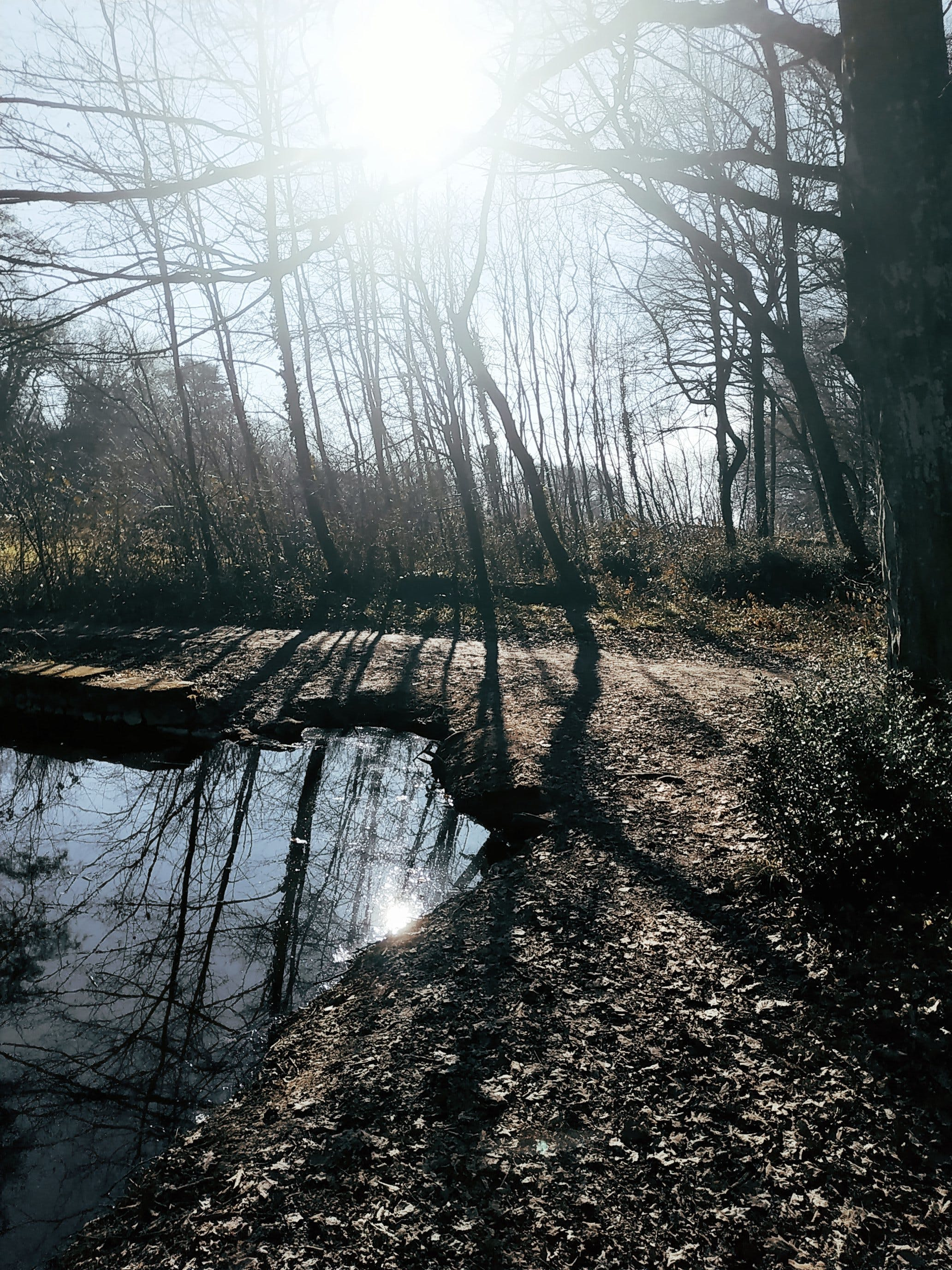 Free stock photo of forest, nature, reflections, sun