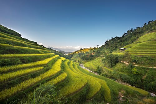 Foto stok gratis agrikultura, alam, bidang, di luar rumah