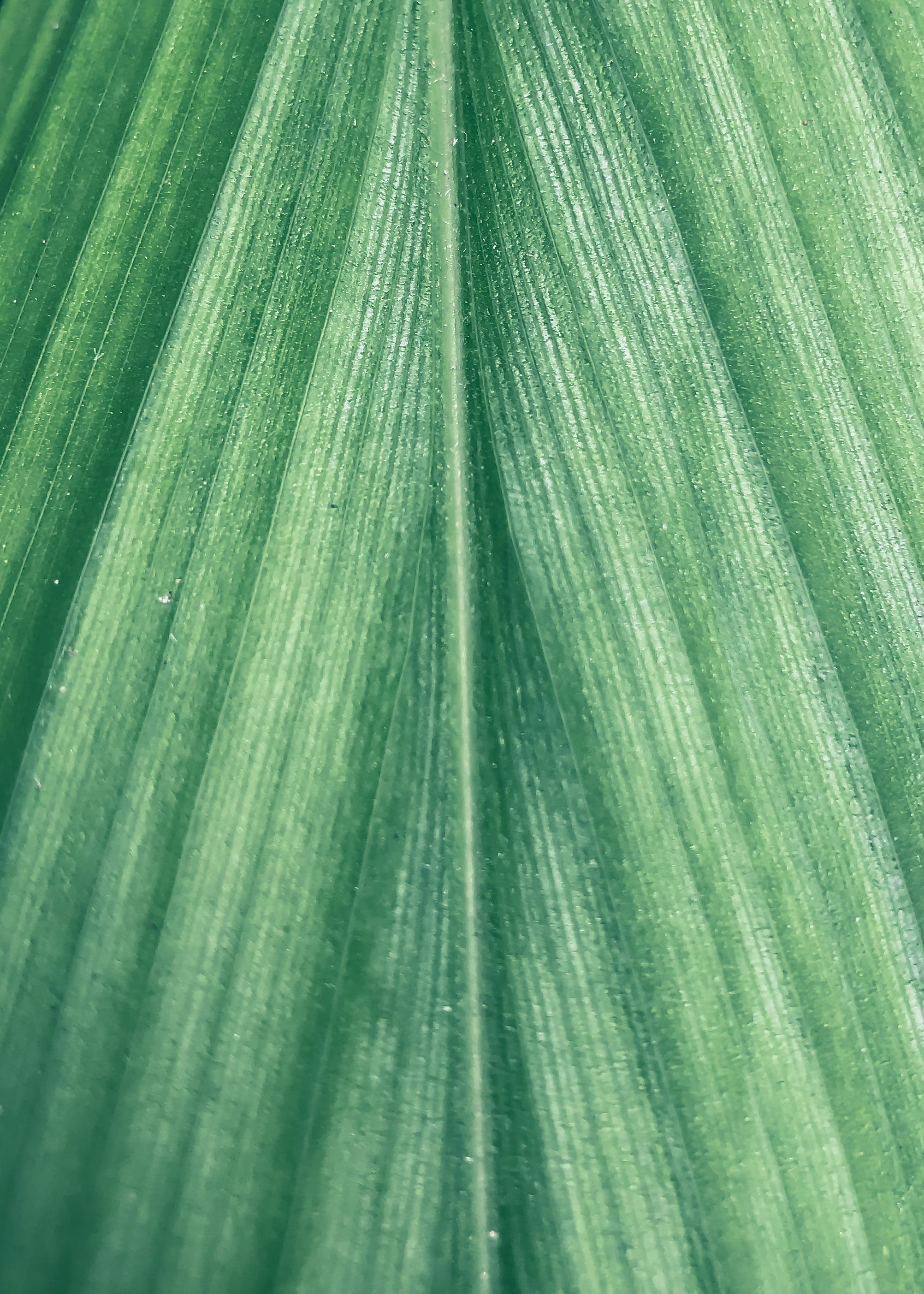 Close-up Shot Of Leaf