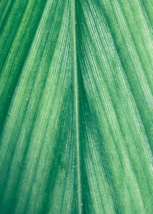 녹색, 디테일, 식물, 이파리의 무료 스톡 사진