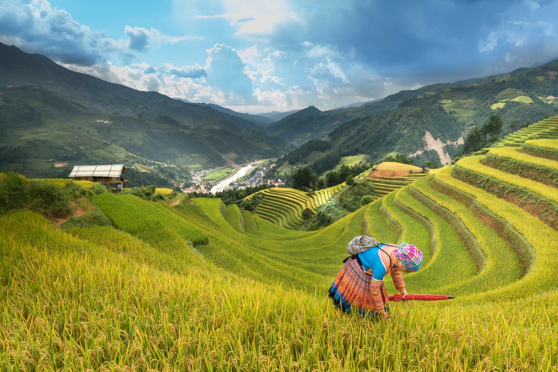 Woman Standing On Rice Terraces