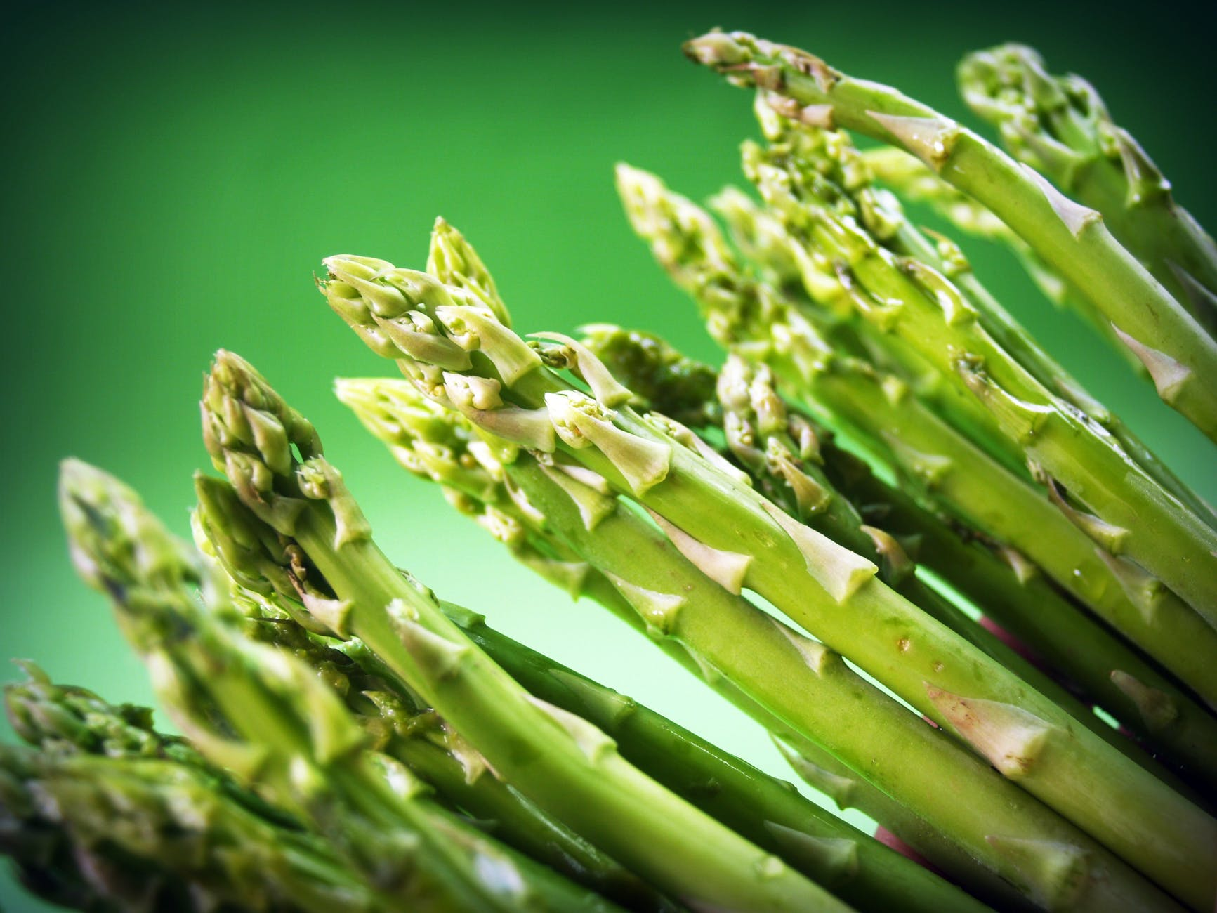 Asparagus Plant Care | Growing Asparagus From Seeds | Garden Season Planting Guide
