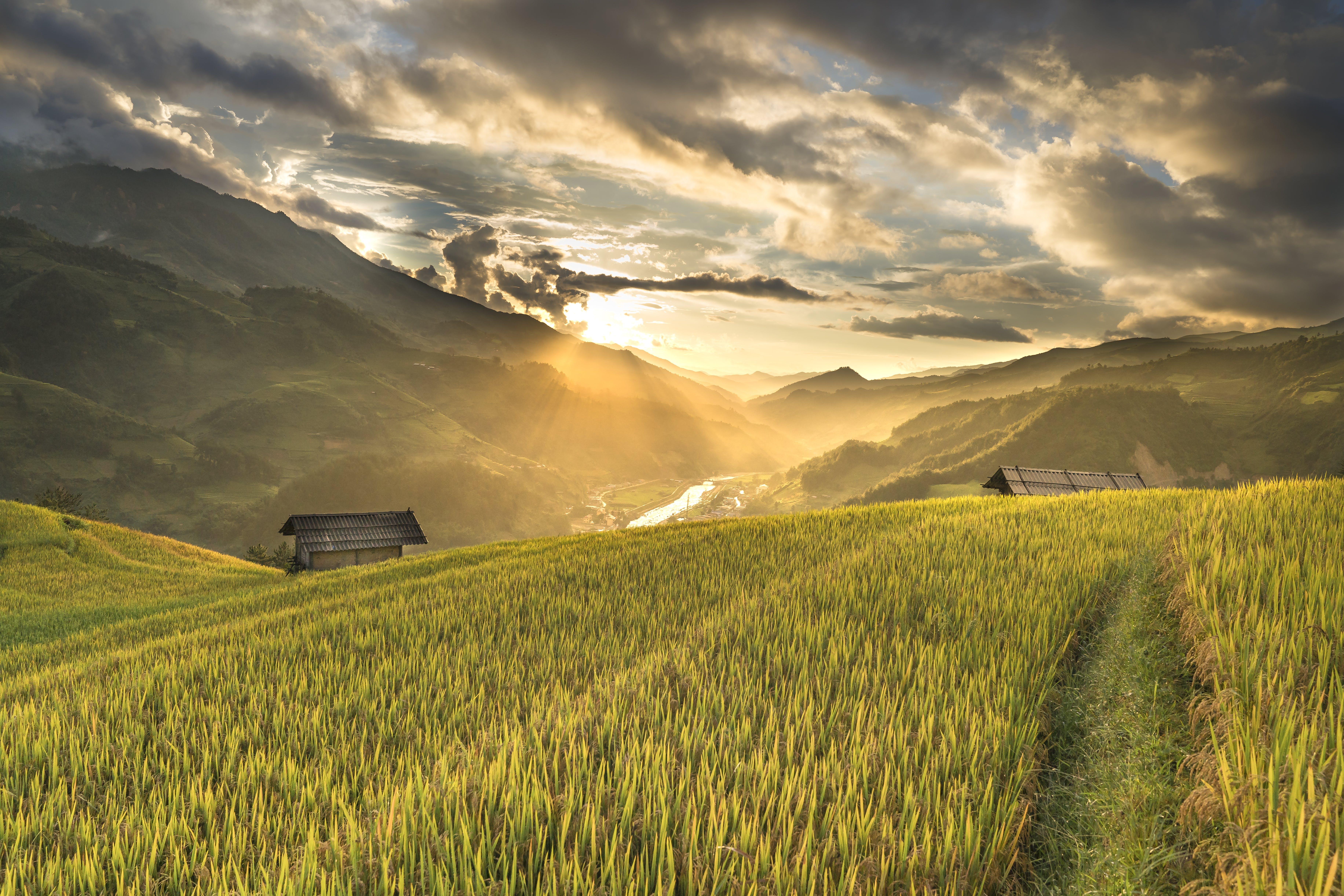 Foto stok gratis agrikultura, bidang, Fajar, lahan pertanian