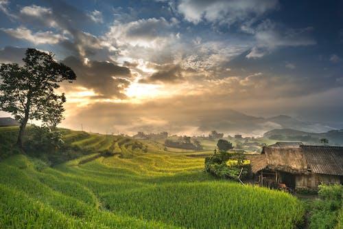 Gratis stockfoto met akkerland, boerderij, buiten, dageraad