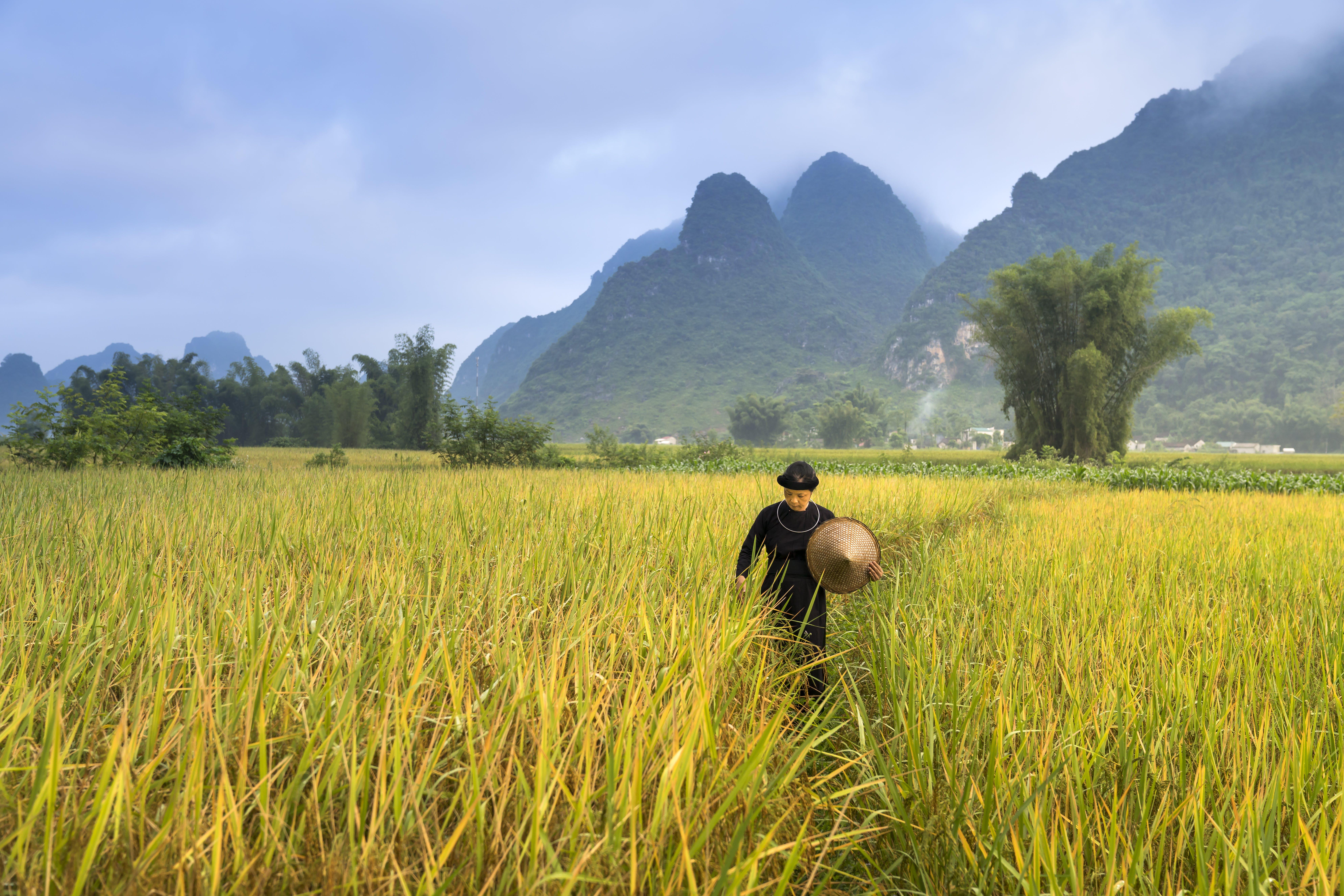 Imagine de stoc gratuită din agricultură, câmp, cereale, cultură