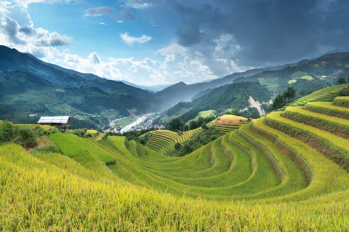 Rice Terraces View
