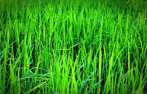 alan, bitki, büyüme, büyümek içeren Ücretsiz stok fotoğraf