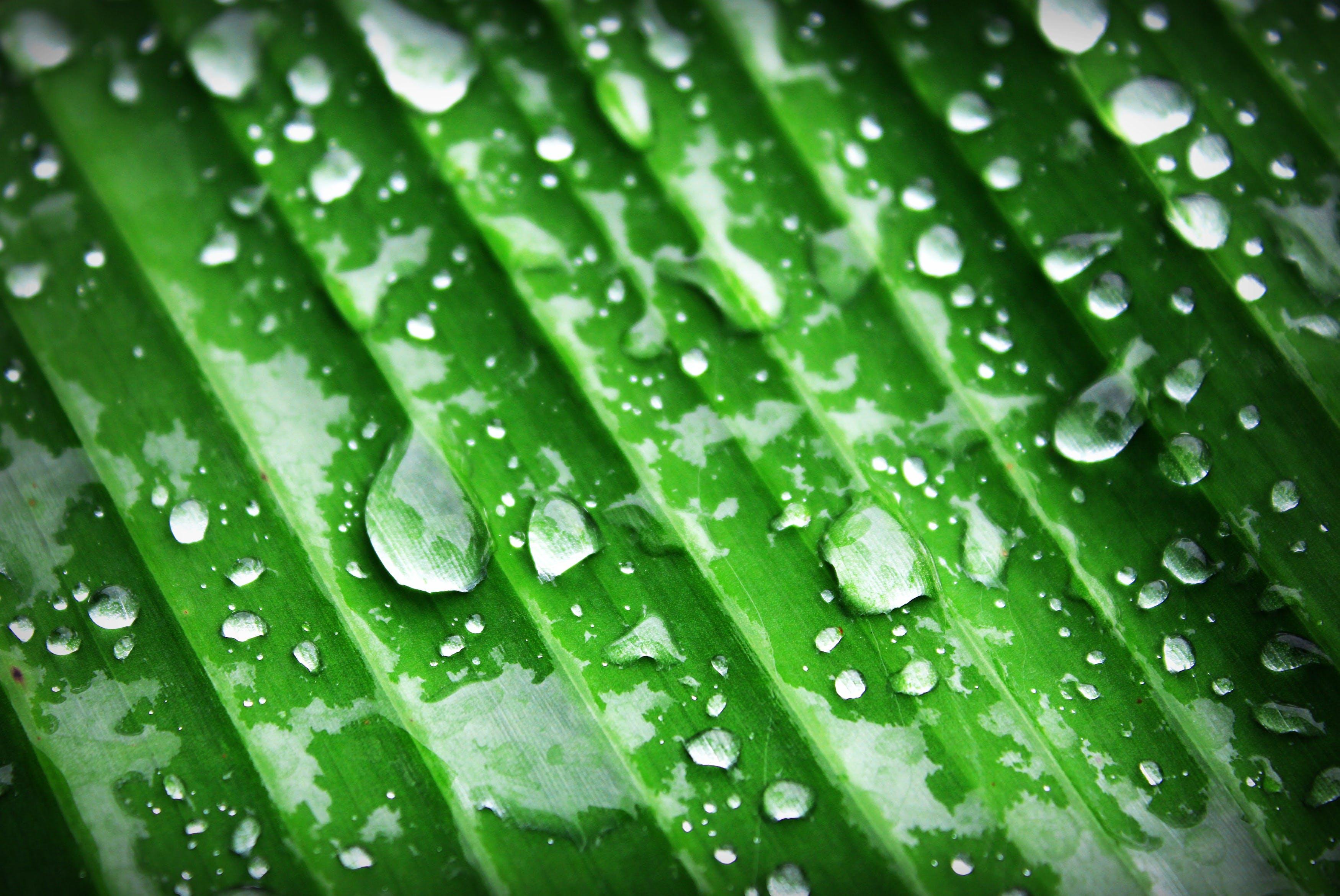 Kostenloses Stock Foto zu wasser, pflanze, blatt, tau
