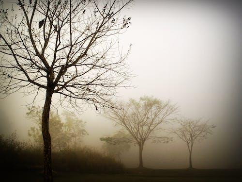 Gratis lagerfoto af farver, grene, græs, landskab