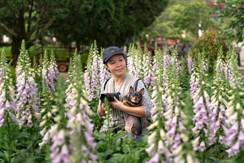 Kostenloses Stock Foto zu asiatische dame, asiatische frau, ausdauernd, baum