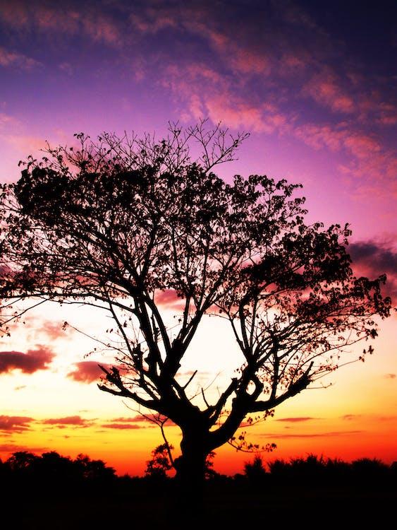 Silhouette of Tree Under Orange Sunset