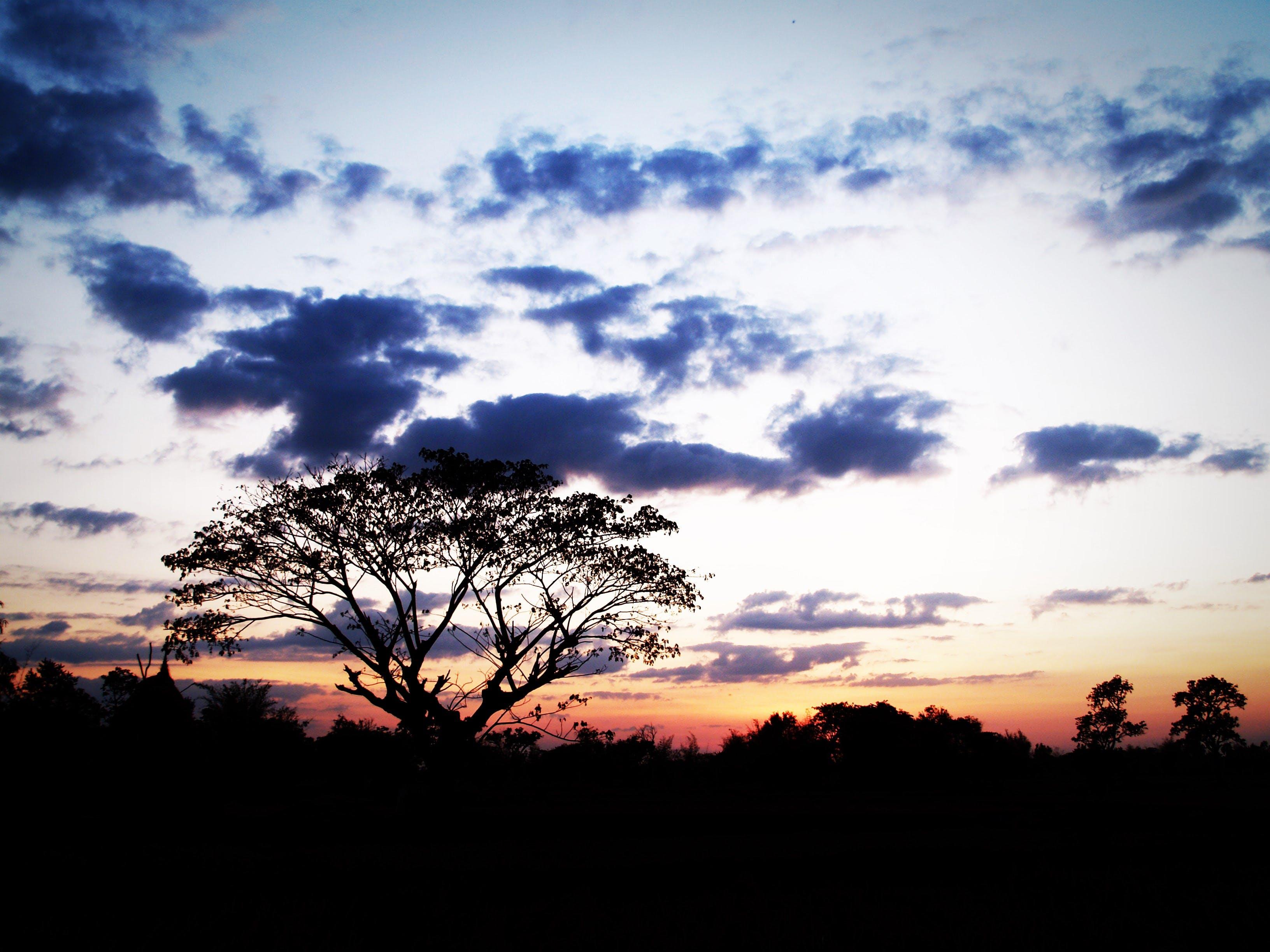 Kostenloses Stock Foto zu abend, ast, bäume, blau
