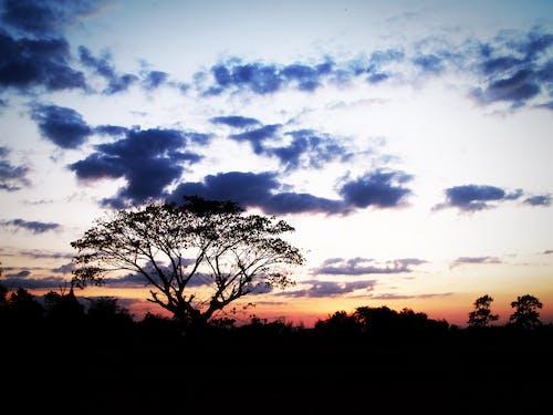 Imagine de stoc gratuită din albastru, apus, arbori, creangă