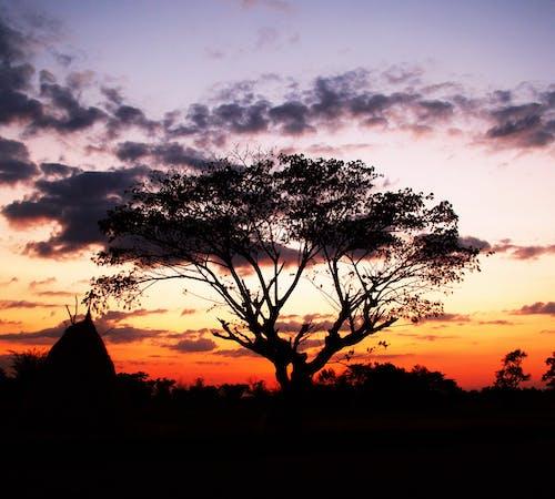 Foto profissional grátis de alvorecer, árvore, céu, conhecimento