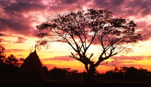 分支機構, 壞心情, 天空, 日落 的 免費圖庫相片
