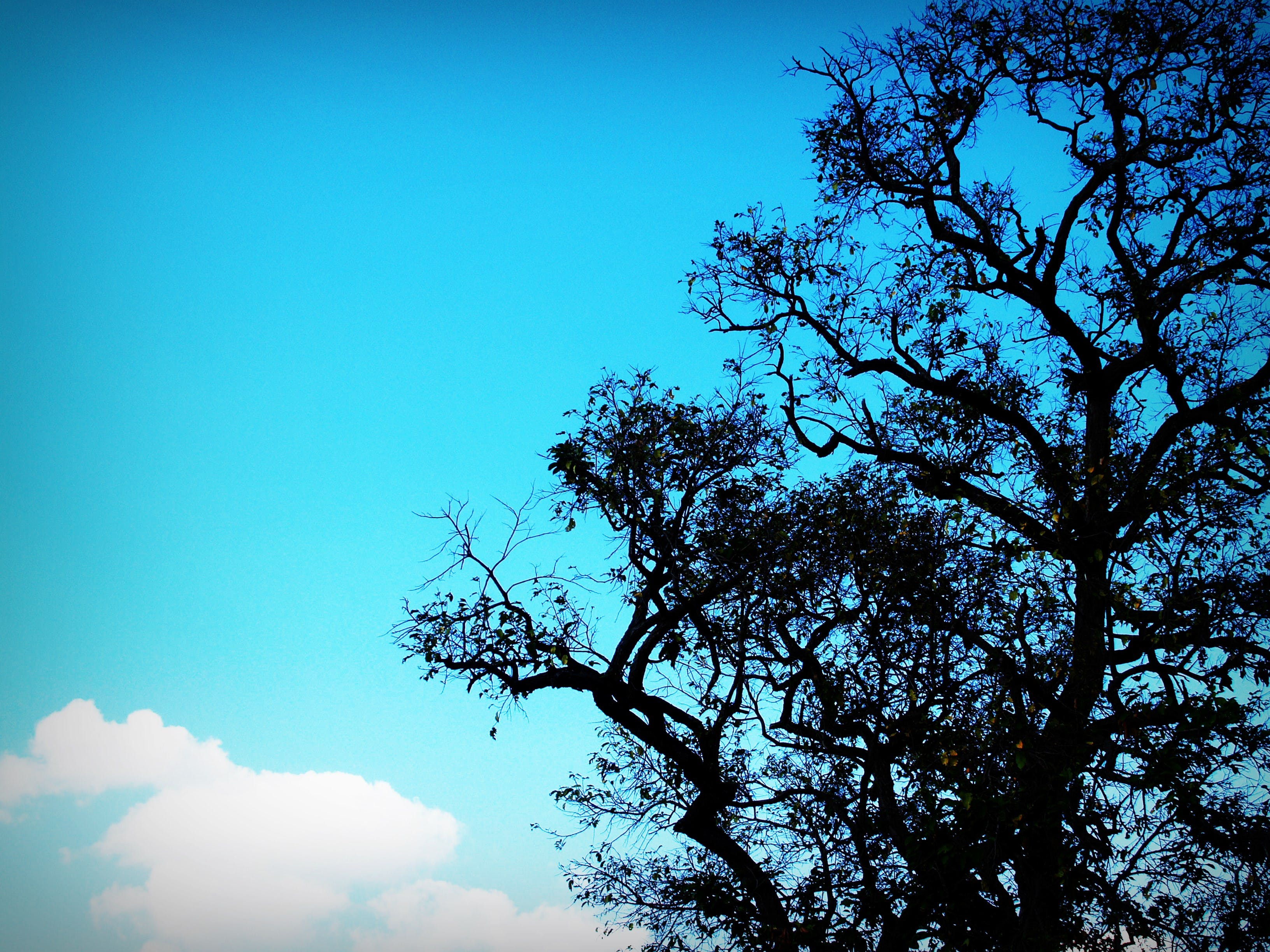 background, branches, clouds