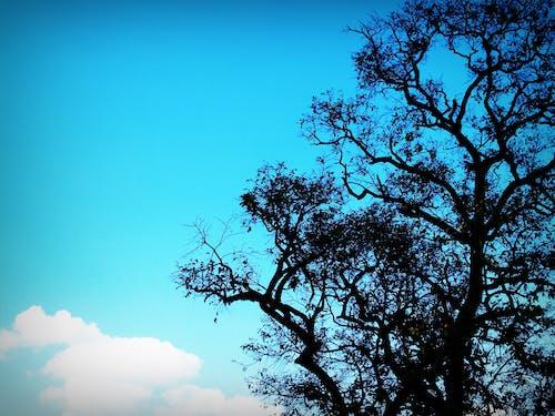 Gratis stockfoto met achtergrond, boom, hemel, hout
