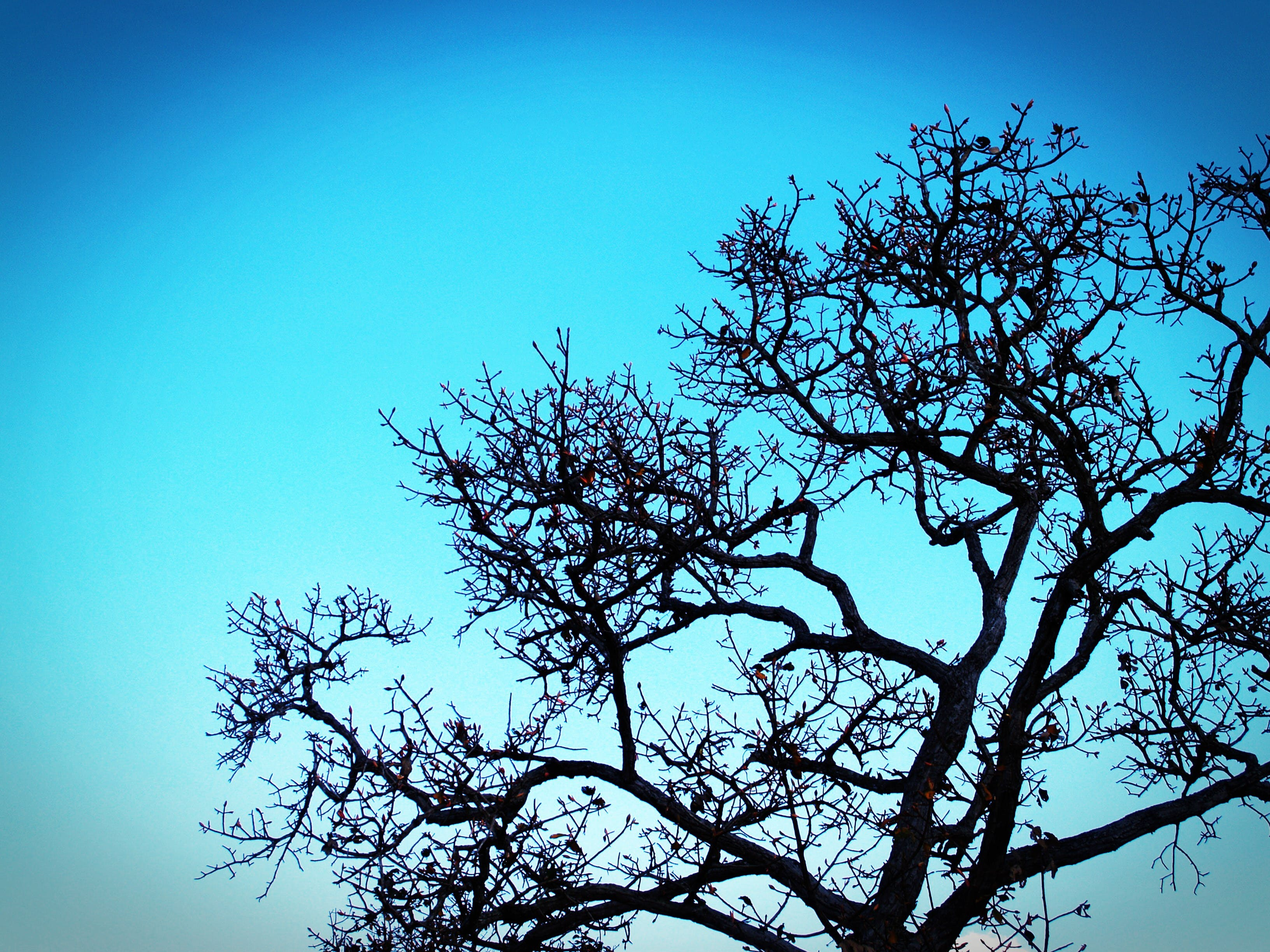 Silhouette Photo of Tree
