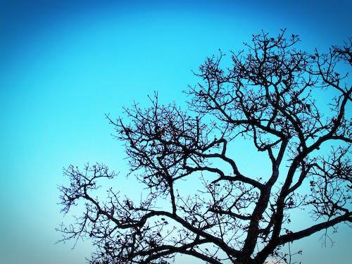 Foto d'estoc gratuïta de arbre, branques, brillant, cel