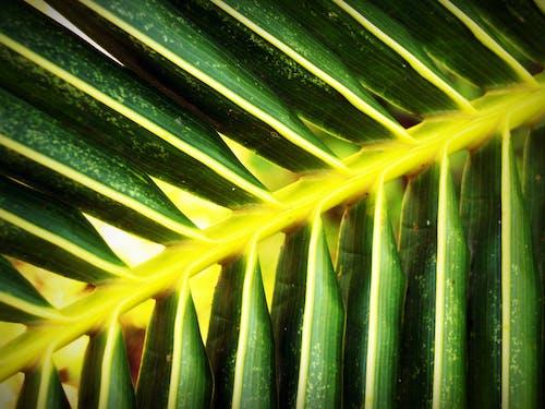 Безкоштовне стокове фото на тему «візерунок, великий план, життя, зелений»