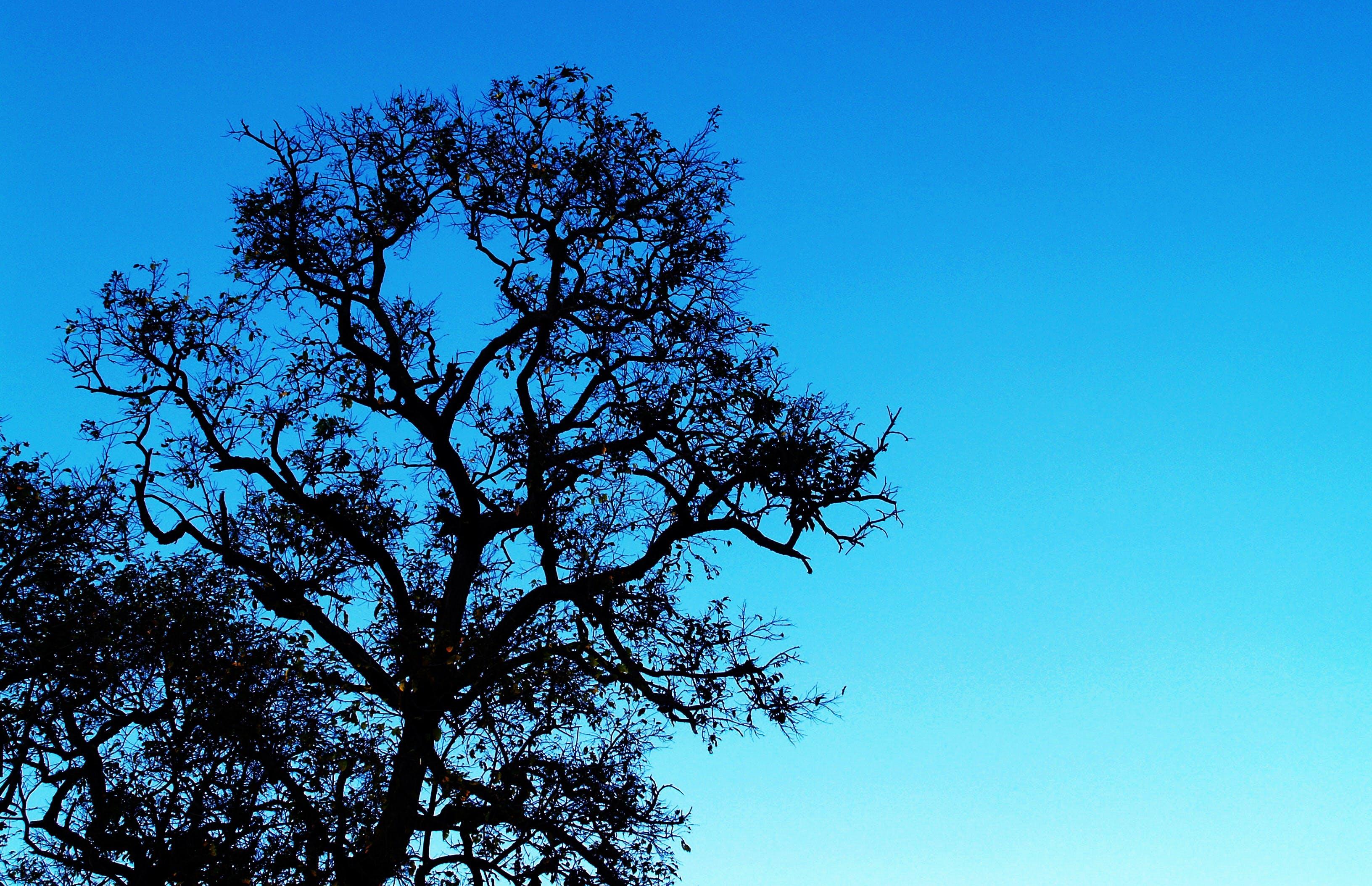 Foto profissional grátis de árvore, céu, conhecimento, cores