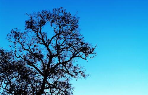 açık hava, ağaç, arka fon, çevre içeren Ücretsiz stok fotoğraf