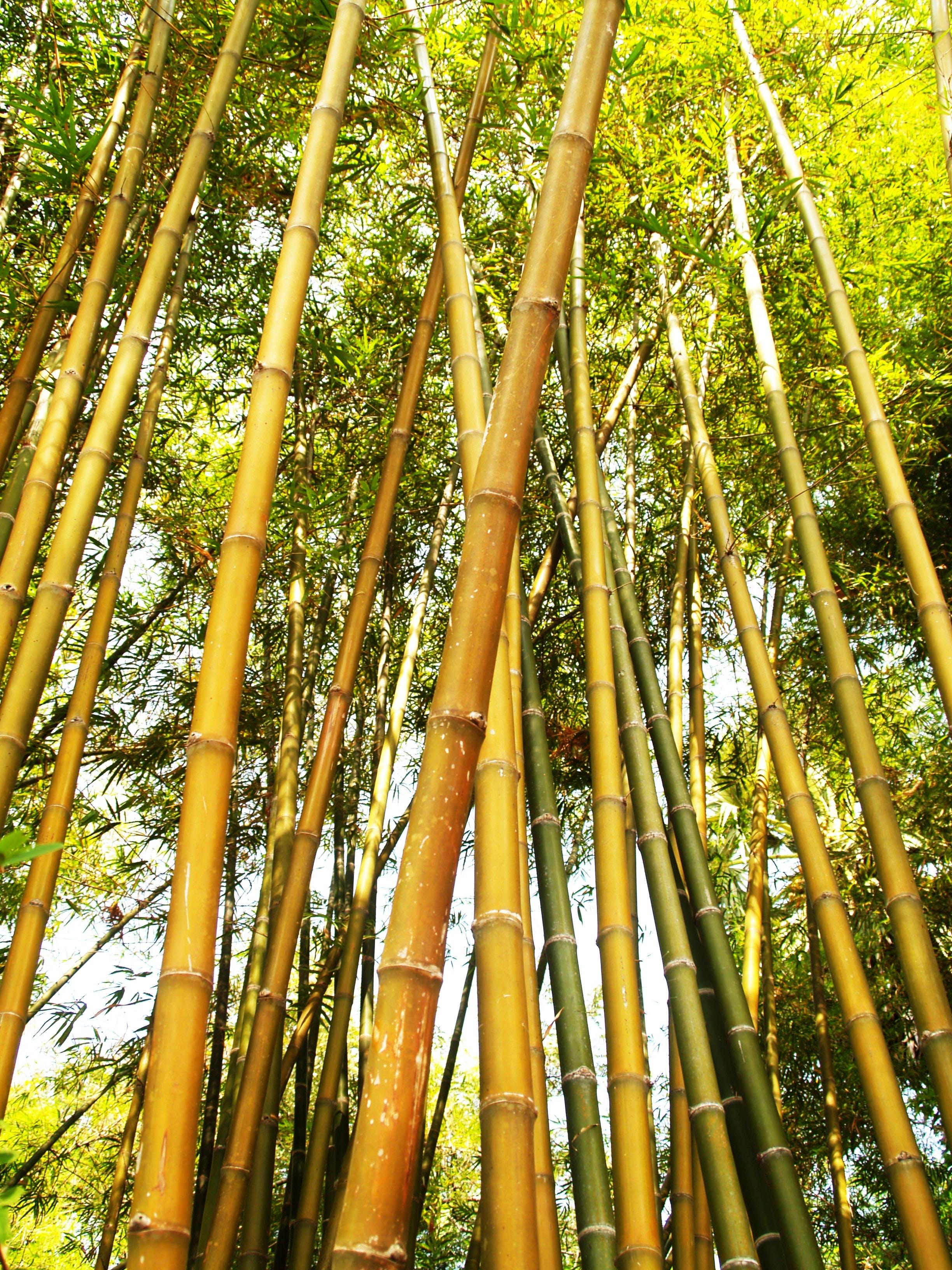 Бесплатное стоковое фото с Азия, ветвь, дерево, джунгли