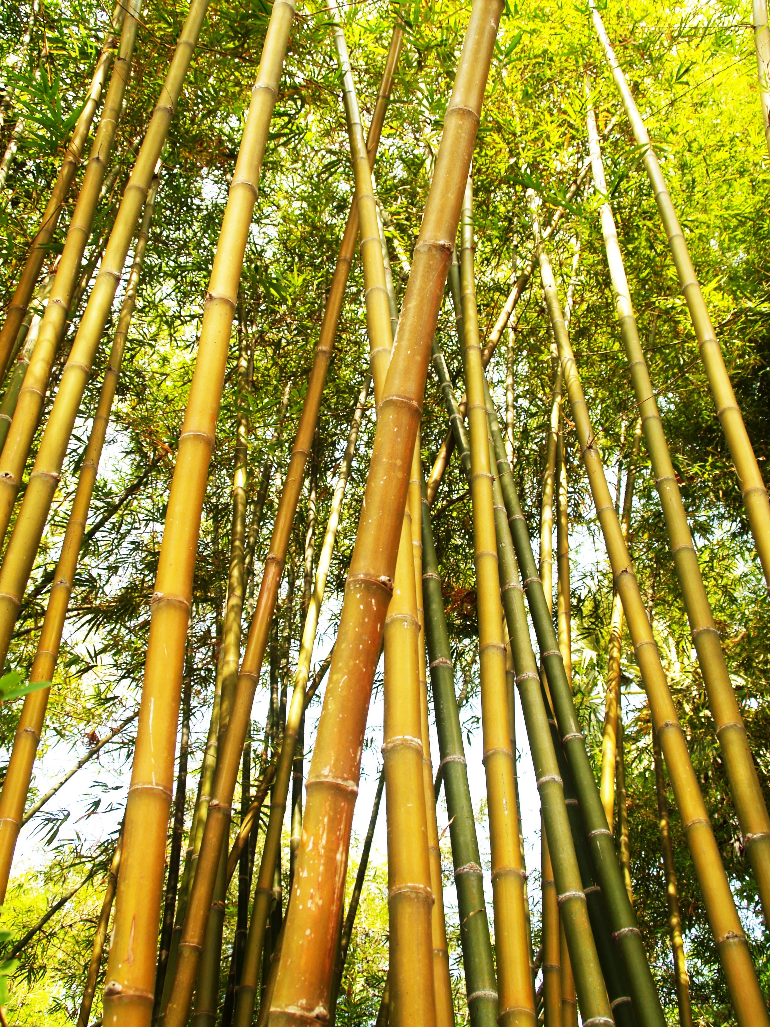 Bamboo Tree During Daytime Icon0