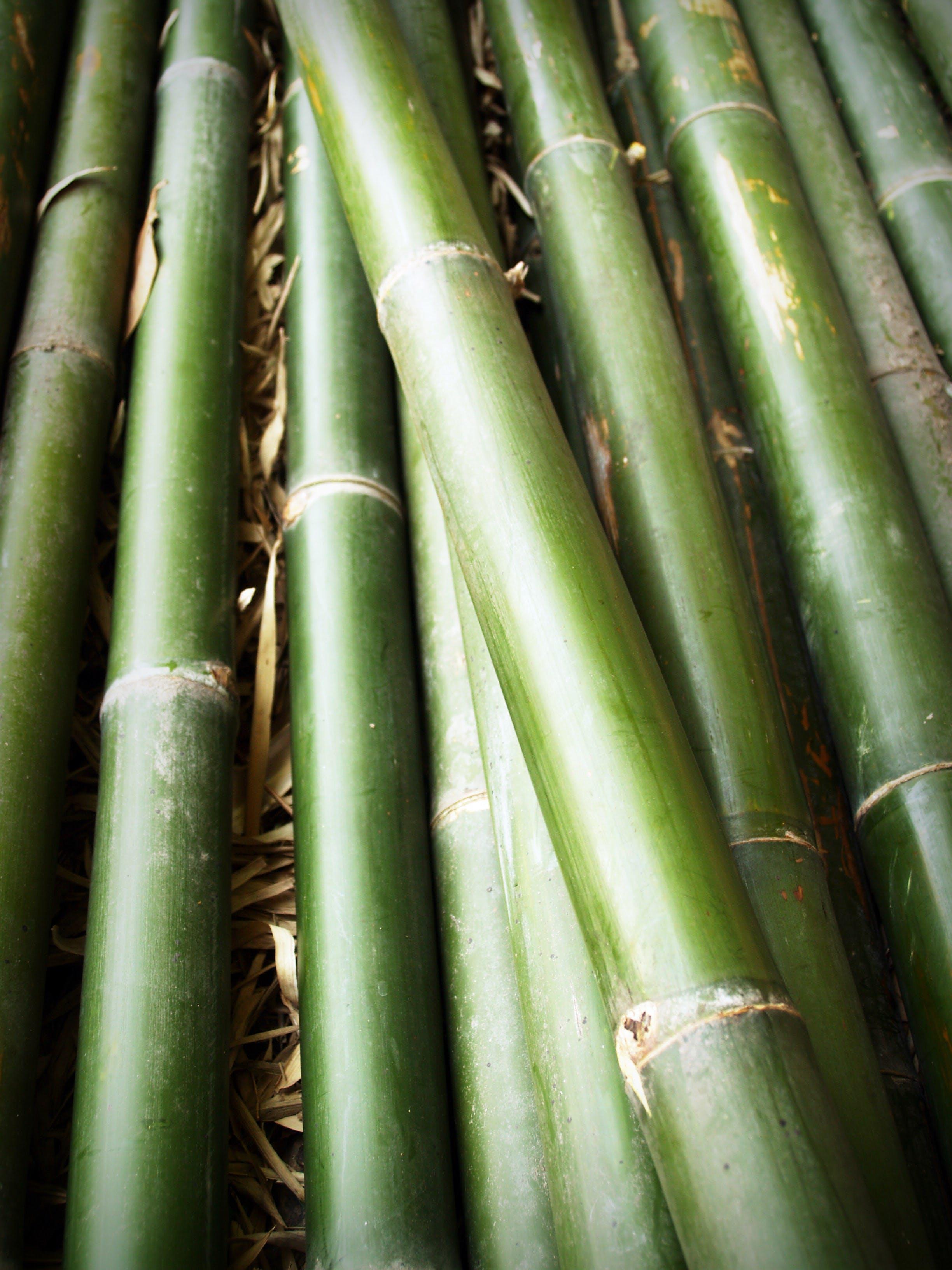 Green Bamboo Sticks