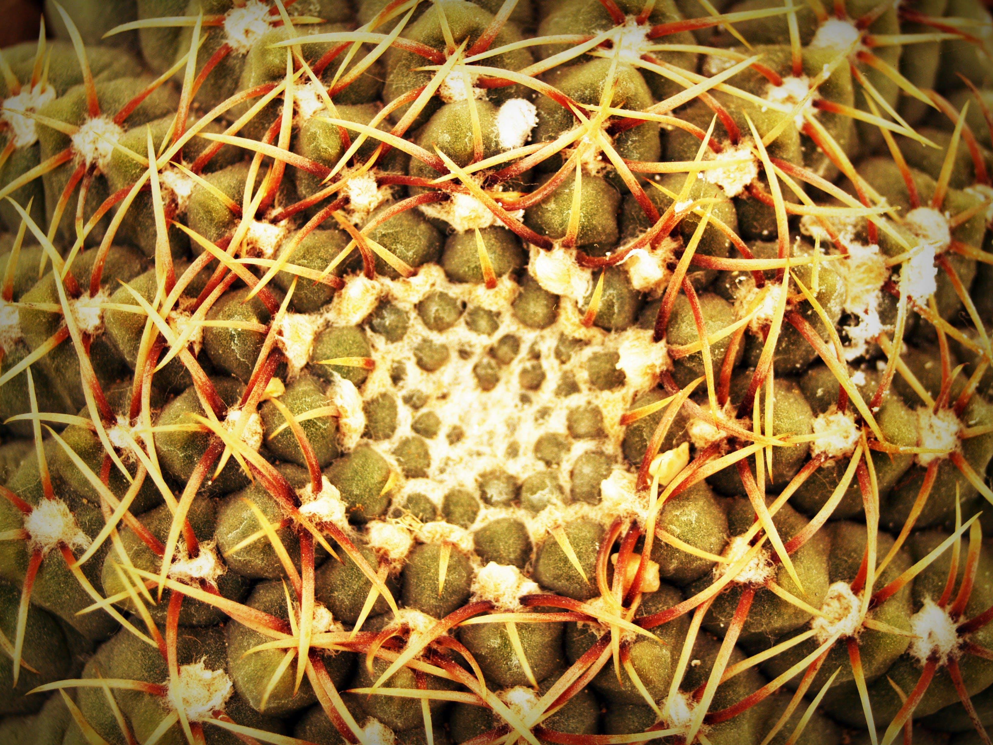 Macro Photography of Cactus Plant