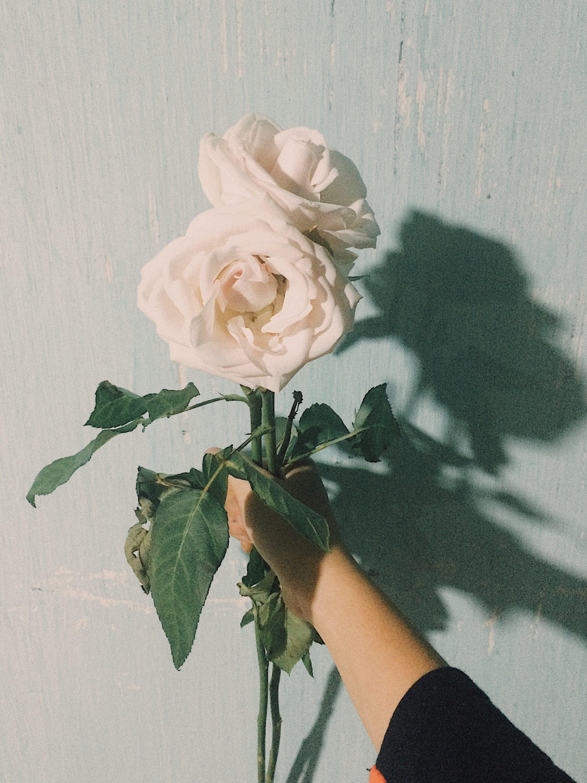 Kostenloses Stock Foto zu blüte, blütenblätter, festhalten, flora