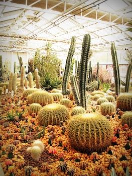Free stock photo of garden, stones, plants, green
